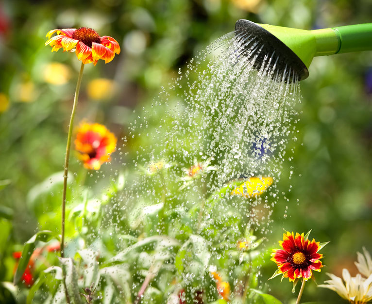 Ratgeber Garten aktualisierte auflage ral ratgeber garten und natur ral gütezeichen